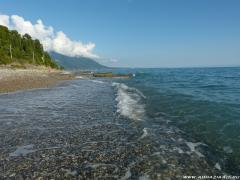 Абхазия, Гребешок (частный сектор, без посредников)