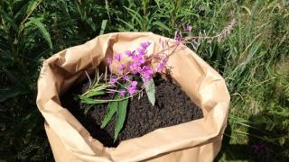 Иван-чай Оптом ферментированный, урожай 2020 года