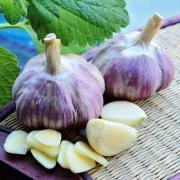 Продается чеснок для весенней и осенней посадки, лучшие сорта