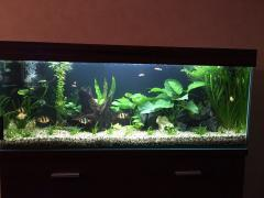 "Shop ""Akvarim - aquariums, terrariums, lighting orders"